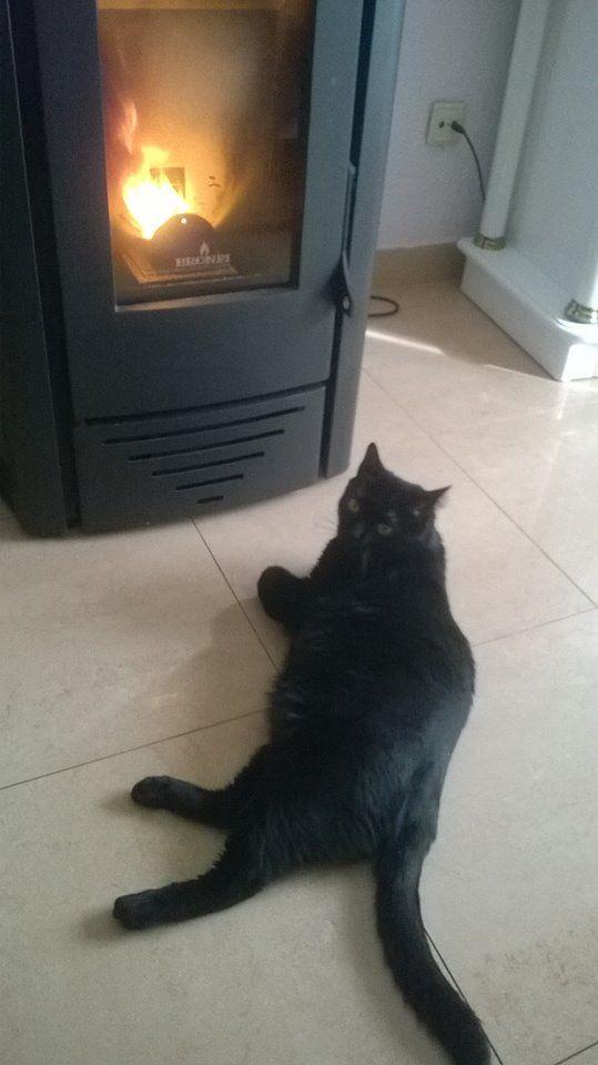Salem calentandose