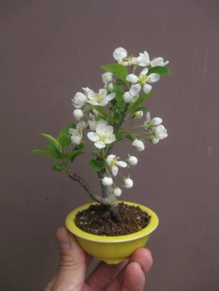盆栽:花いろいろ
