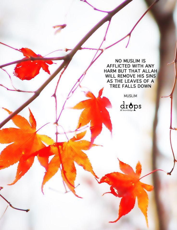 Allah Will Remove His Sins (Prophet Muhammad ﷺ Quote)