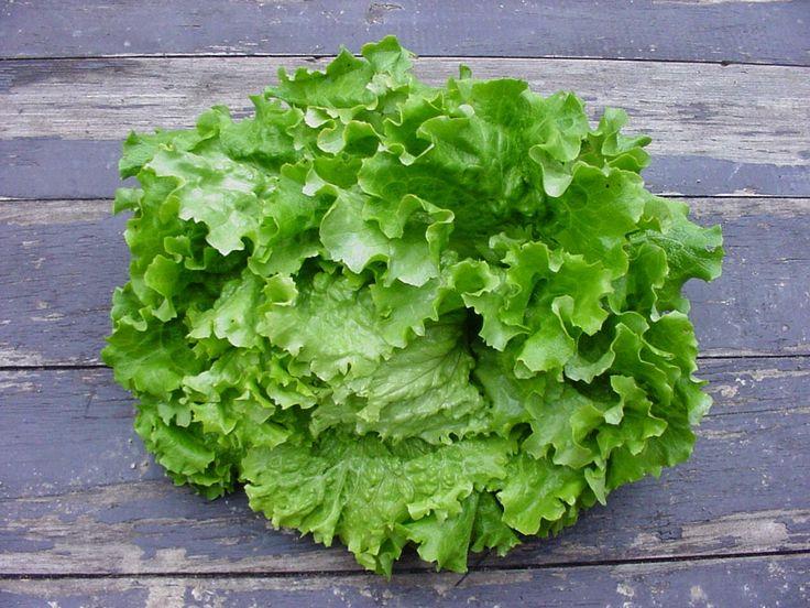 Salade vert