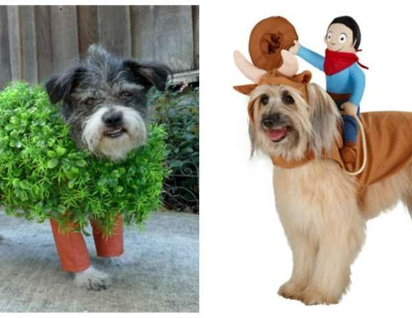 12 Great Halloween Costume Ideas for Your Pet