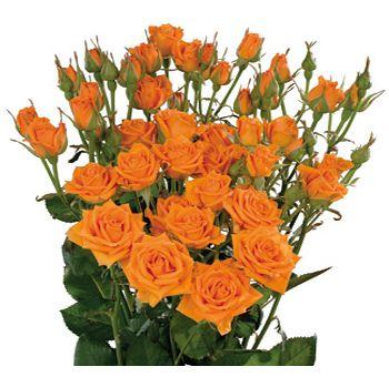Spray Roses Fresh Cut Spray Rose Flowers For Weddings Wedding