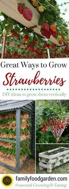 Growing Strawberries Vertically, in containers, in gutters, and more! Easy DIY! #OrganicGarden