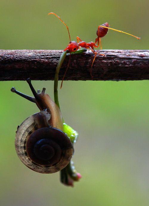 Hang on buddy, I'll save you!