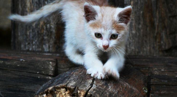 Rozumiesz, co mówi twój kot? Jeśli nie, pomogą szwedzcy naukowcy  * * * * * * www.polskieradio.pl YOU TUBE www.youtube.com/user/polskieradiopl FACEBOOK www.facebook.com/polskieradiopl?ref=hl INSTAGRAM www.instagram.com/polskieradio