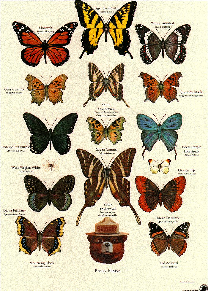 Butterfly identification poster from the U.S. Forestry Service . Insect activity, Apologia Flying Creatures, #homeschool http://shop.apologia.com/63-zoology-1