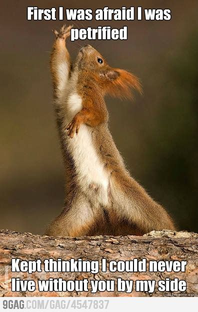 Dramatic Squirrel is dramatic