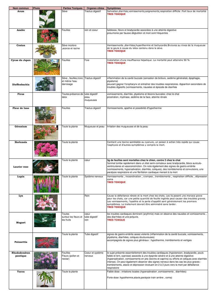 Les plantes toxiques pour les chats - Abyssins d'Abystyle