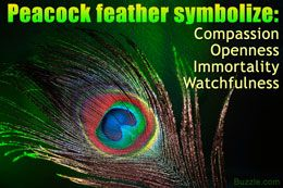 Peacock feather symbolism