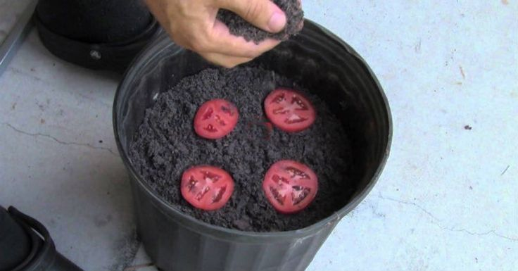We All Laughed When He Placed Tomato Slices Into A Flower Pot. But His Reason Why? I HAD NO IDEA! – AWM