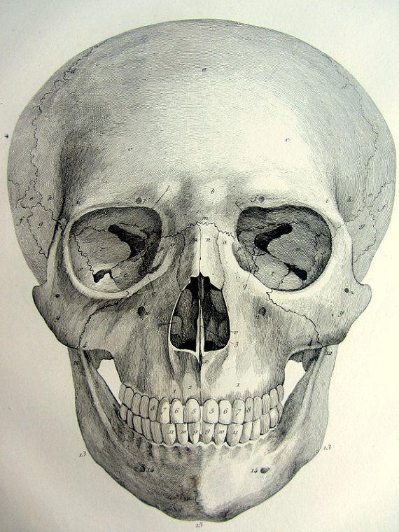 1831 crâne d'anatomie antique gravure original par LyraNebulaPrints