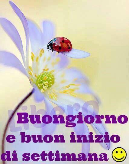188 best buongiorno e buon lunedi images on pinterest for Immagini buon lunedi amici