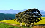 Greyton, South Africa - beautiful Xx