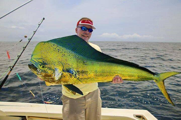 Dolphin fish aka dorado mahi mahi natural a for Is a dolphin a fish