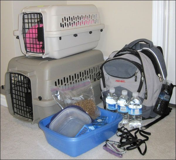 evacuation kit | Are you prepared for an emergency evacuation with your cat? Or in my ...