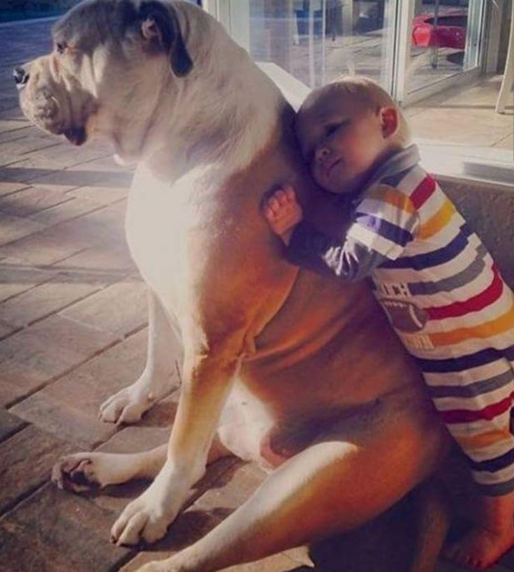 Best Dogs Images On Pinterest Beautiful Big Dogs And Big - 23 adorable photos proving babies need pets