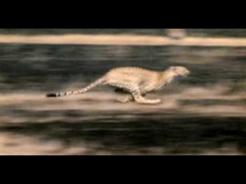 Tien snelste dieren ter wereld