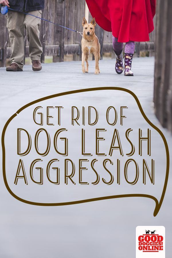 Get Rid Of Dog Leash Aggression Once And For All Leash