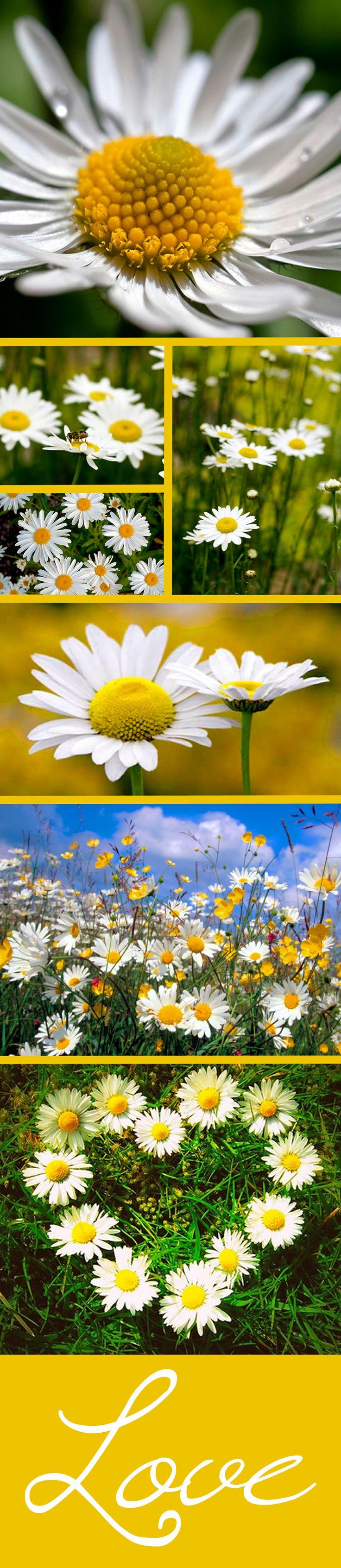 best Flower Power images on Pinterest