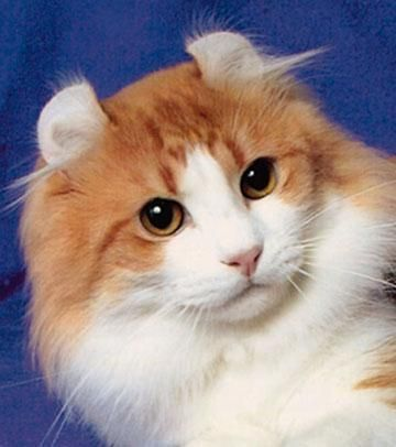 """""""Cats' hearing apparatus is built to allow the human voice to easily go in one ear and out the other."""" --Stephen Baker"""