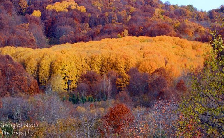 Φθινοπωρινά χρώματα στην ορεινή περιοχή Μακρυπλαγίου - Πολυκάρπου Δράμας 2016 (φωτογραφίες)