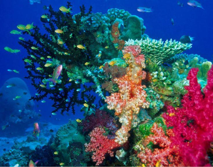 Imagen del fondo del mar en Kiribati