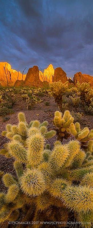 Cactus Cholla  - Kofa Mountains -  Arizona - USA - Southwest  SUNSET  #by Peter Coskun Nature Photography #landscape desert nature mountain