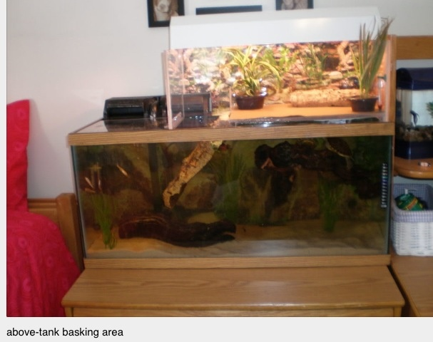 1000 Images About Reptile Tanks Ideas On Pinterest