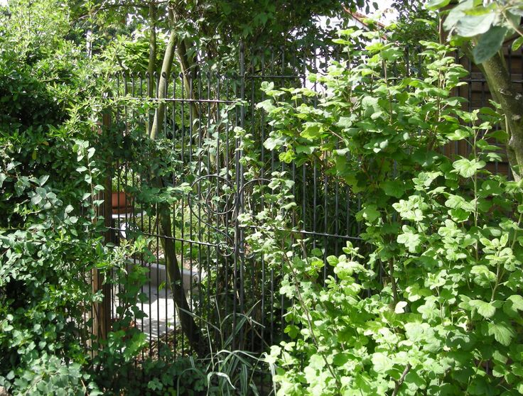 anneau-engmaschig-195-roh: Wie hatten eine Lösung zur Abgrenzung des Vorgartens von der Einfahrt für unseren Hund gesucht und sind zufällig auf den Steckzaun gekommen. Die Bestellung ging reibungslos. Die Lieferung erfolgte dann wie vorausgesagt. Wir hatten noch Bedenken, ob wir den Zaun in unseren harten steinigen Boden bringen. Aber auch das war nach einer guten Stunde geschafft. Alles in allem: Reibungsloser Bestellvorgang, gute Qualität, guter Service