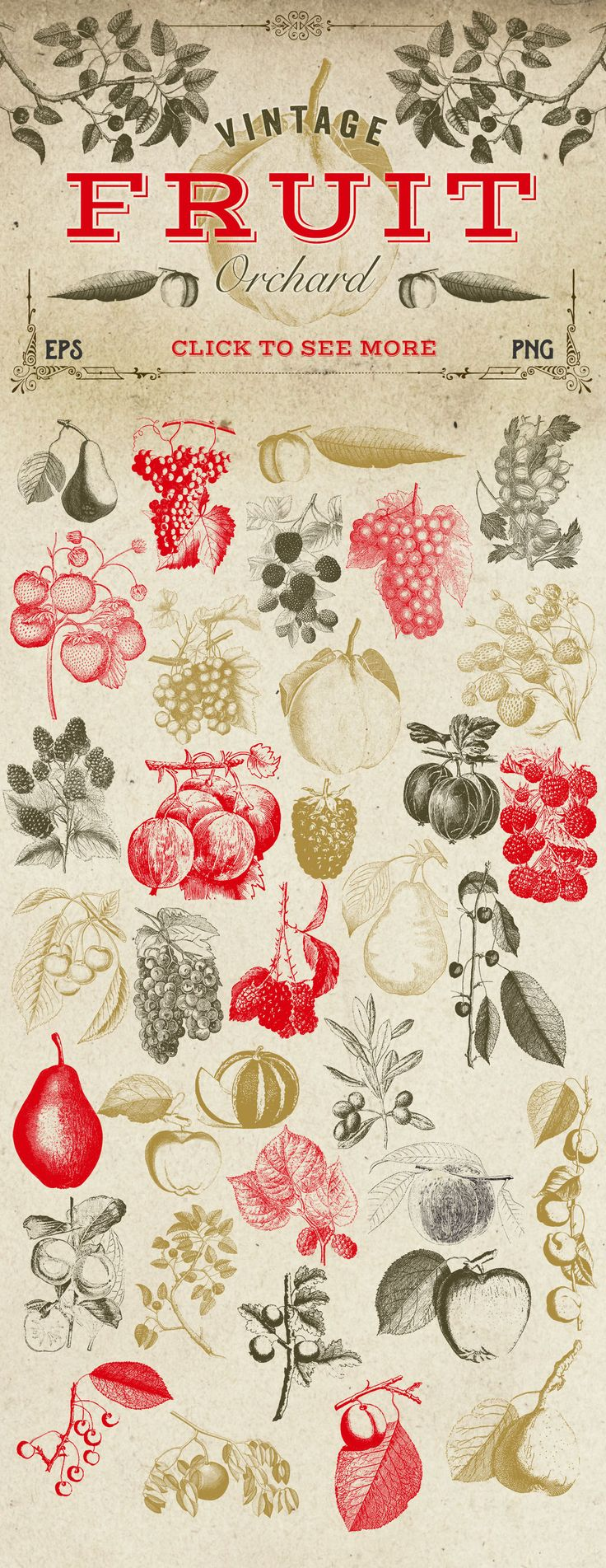 Vintage Fruit Vector Graphics by Eclectic Anthology on Creative Market