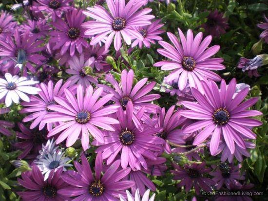 25 Best Ideas About April Birth Flowers On Pinterest