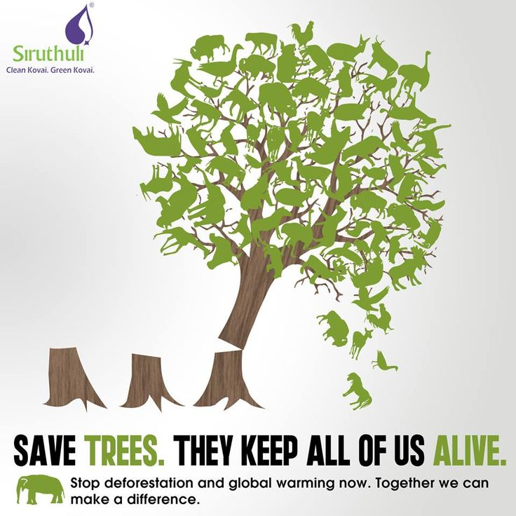 simple primary essay of save trees Easy way ( a blog for children) is a blog for today's children it contains moral stories, short stories, folktales, panchtantra stories , poems, rhymes, articles, facts and activities for kids written beautifully in simple and easy englishchildren can gain good knowledge by visiting and reading this blog.