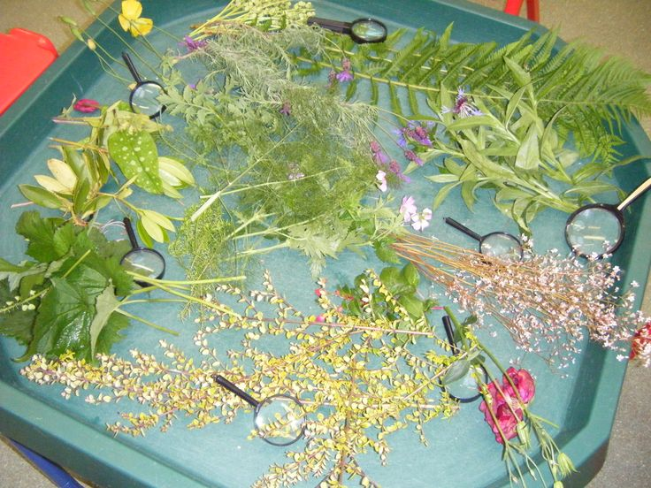 Selection of garden plants/flowers and magnifying glasses