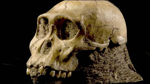 Bones of Au. sediba, our oldest ancestor (1.977 million years old) species  just under two million years old.