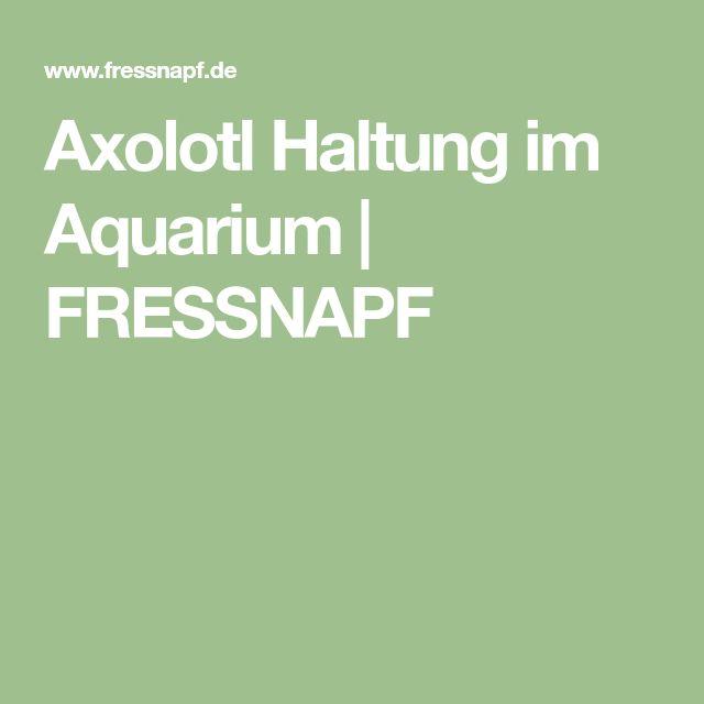 Axolotl Haltung im Aquarium | FRESSNAPF