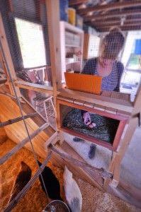 Ящик с гнездом, из которого вдвойне удобней забирать яйца: крышка ящика находится во внутренней крытой части комбо-курятника