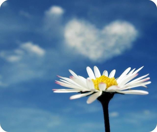 *Daisy dreams of love ~``♥``~