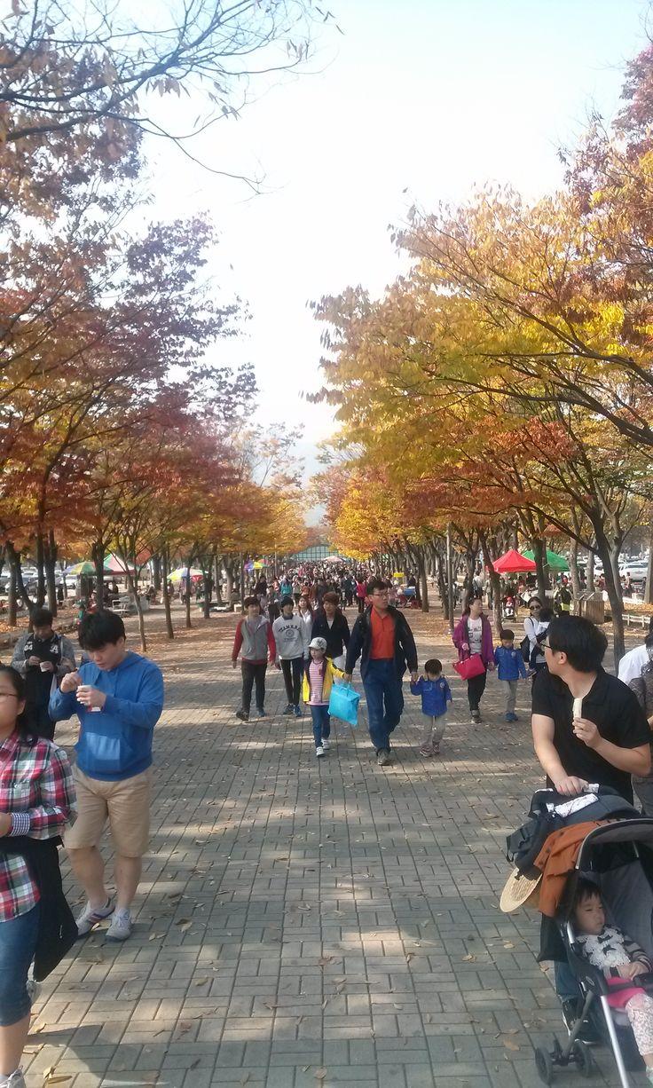 서울대공원으로 들어오는 입구, 낙엽이 제법 물들어갑니다.  11월 중순까지 매주 토,일 진행될 예정으로 가족, 친구, 연인 등 함께 오시지 않겠어요?
