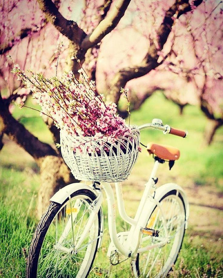 Hani bahar gelmişti  #bisikletliyaşam #bike #bisikletturu #cycling #bisiklet #biketour #instabikers #instabicycle #instanice #bisikletsevenler #bisikletözgürlüktür  #bisikletliulasim #enerji  #mersinbisiklet #bubisiklet #görsel #manzara #doğa #çocuk #uzunyol #istanbuldayaşam #iş #istanbul #trafik #kış #yağmur #soğuk #ilkbahar