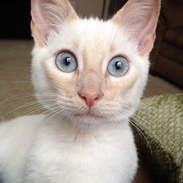 #kucingbikingemes ini kiriman dari : @dantewasacat    punya #kucingbikingemes juga? follow dan tag @kucingbikingemes  jangan lupa pakai #kucingbikingemes   via #catsofinstagram #cat #cats #catofinstagram #cat_of_instagram #catstagram #catsoftheworld #catslover #catgram #catagram #catslife #kucing #kucingku #kucinglucu #kucingsaya #kucingimut