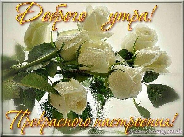 Красной горки, белые розы картинки с надписью доброе утро