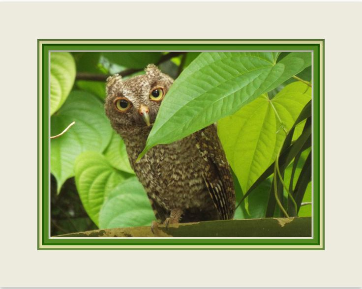 """Peek-A-Boo Owl. Wall Decor. Burrowing Owl in Digital Print. 8""""x10"""". Fine Art Photography. Printed Mat. Charming Photo. Frame It Yourself. by VintageArtForLiving on Etsy https://www.etsy.com/listing/474977410/peek-a-boo-owl-wall-decor-burrowing-owl"""