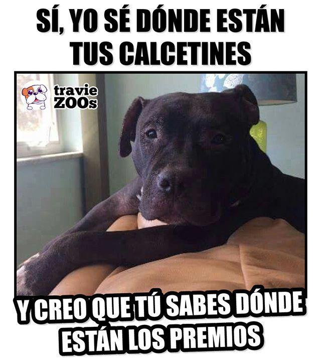 Dejemos De Hacernos Los Tontos Humano Perros Graciosos Memes De Animales Divertidos Humor De Perros