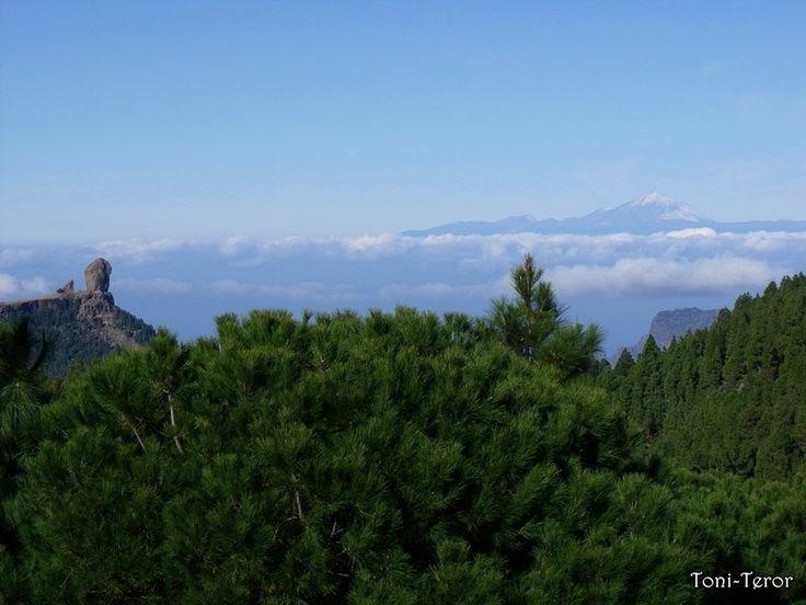 El Roque Nublo y El Teide Tras unos pinos