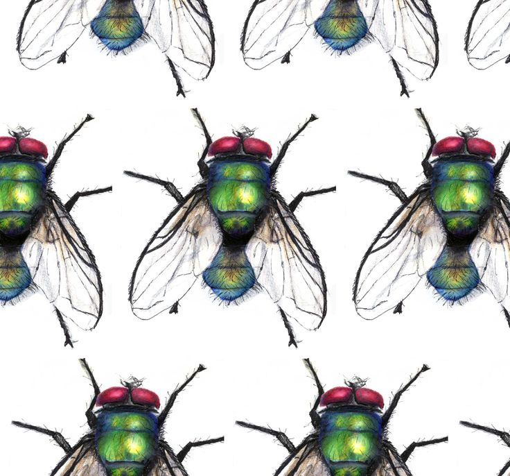 Dehanka Waddell, Portsmouth University  #studentcompetition #design #blinds #patterns #patterndesign #abstractdesign #flies #fly
