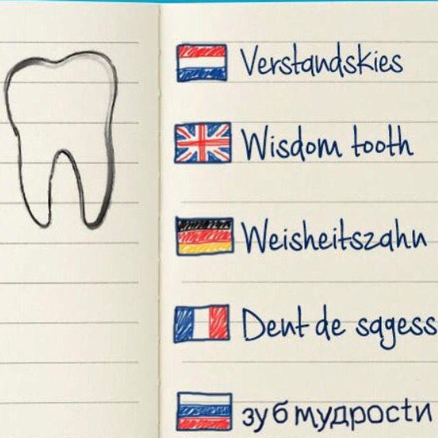 Waar komt de naam vandaan?  #verstandskies #tandartssneek #kliniek #tandheelkunde #sneek