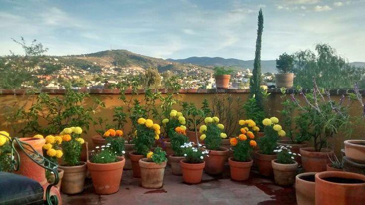 Preparing my teraza for Dia de Muertes in San Miguel de Allende Mexico