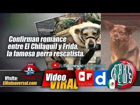 Confirman romance entre El Chilaquil y Frida, la famosa perra rescatista.#México #Noticias #Viral