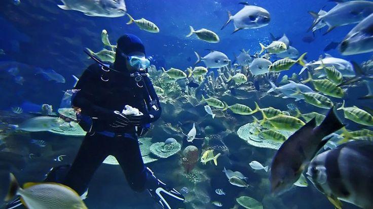 Koh Chang Diving Day Trip