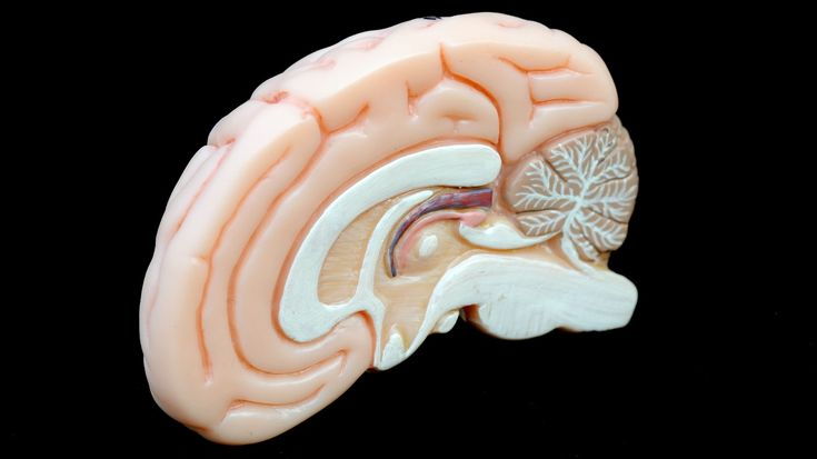 .Umgangssprachlich reden wir häufig von den kleinen, grauen Zellen. In Wirklichkeit sind die grauen Zellen im lebenden Gewebe aber eher rosa. Einige Bereiche im Zentralnervensystem werden als grau bezeichnet, weil sie eine graue Farbe entwickeln, wenn die Gewebeproben mit Konservierungsmittel haltbar gemacht werden.